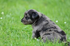 fehlen nur noch die kleinen Strolche... Den passenden Hund hätten wir!